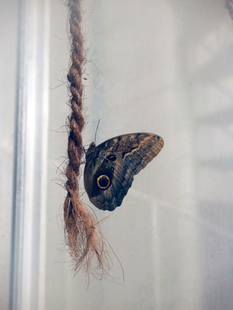 Butterfly on a rope