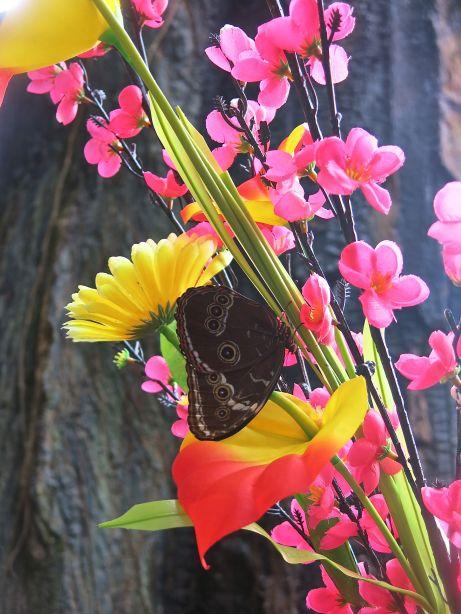 Butterfly amongst flowers