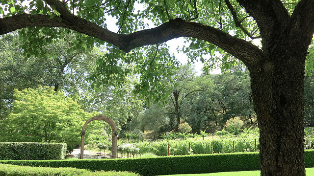 More of Beringer Vineyards