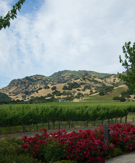 The vineyards at Chimney Rock