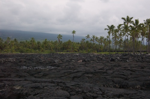 Lava Rocks and Palm Trees