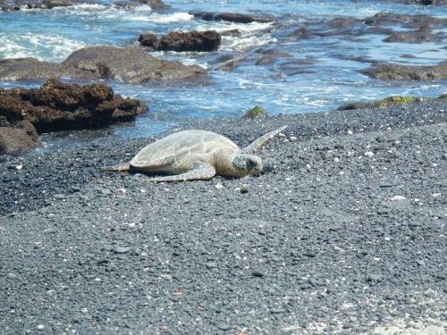 Hi! I'm a turtle!