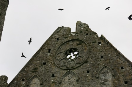 birdscircling