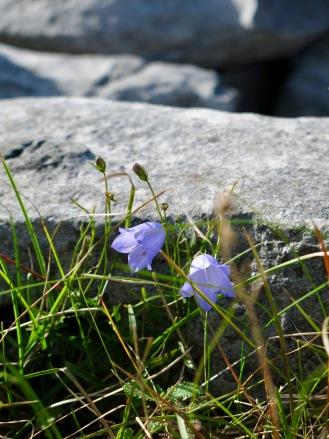 life_among_rocks