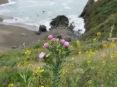 More flowers over Bodega Bay
