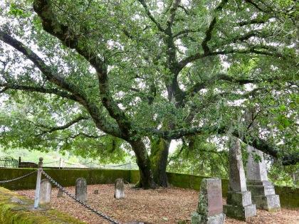 Tree_and_headstones